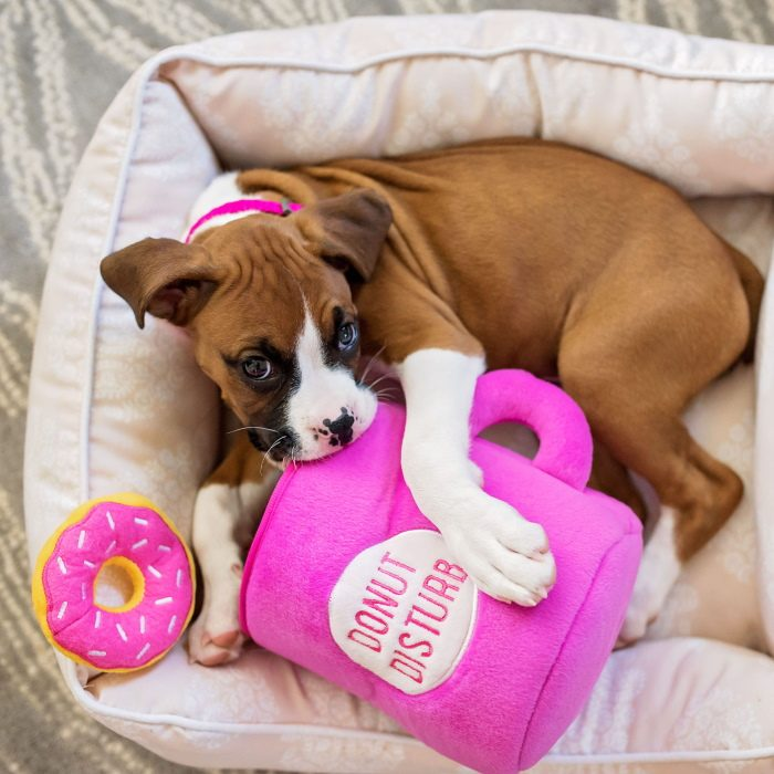 Zippy Burrow Donutz with Coffee Puppy Toy