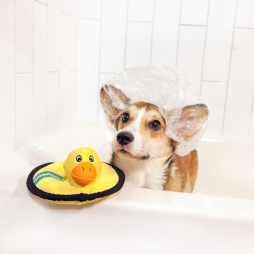 ZippyPaws Floaterz Z-Stitch Duck Water Dog Toy