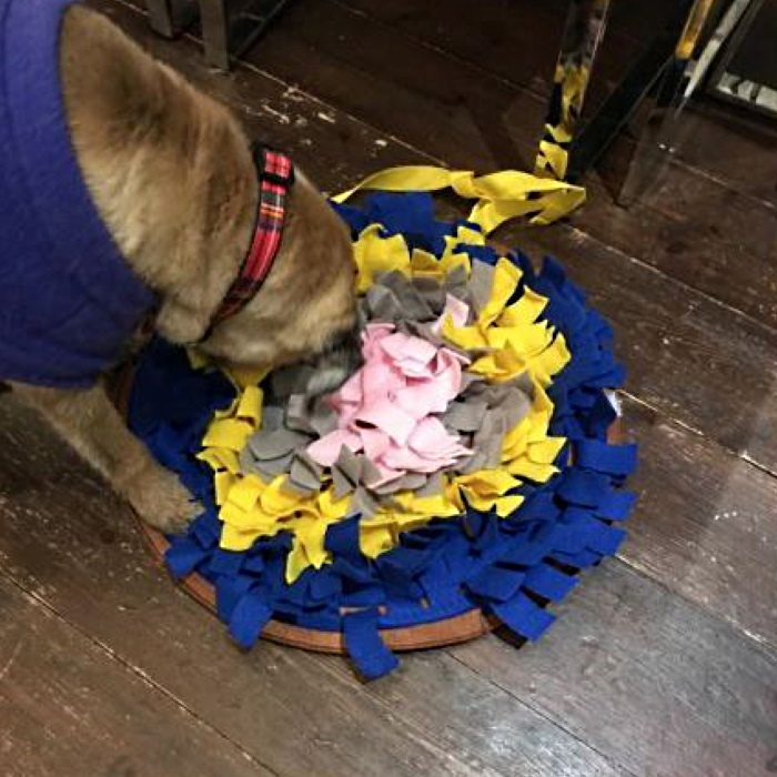 Round Snuffle Mat for Dogs_Navy_dog