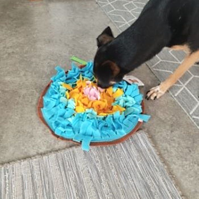 Round Snuffle Mat for Dogs_blue_dog
