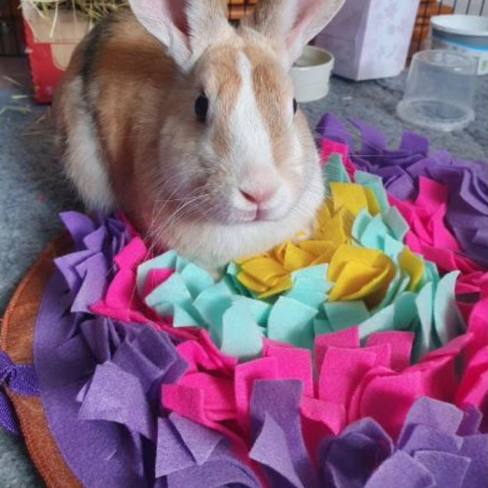 Round Snuffle Mat for Dogs_purple rabbit