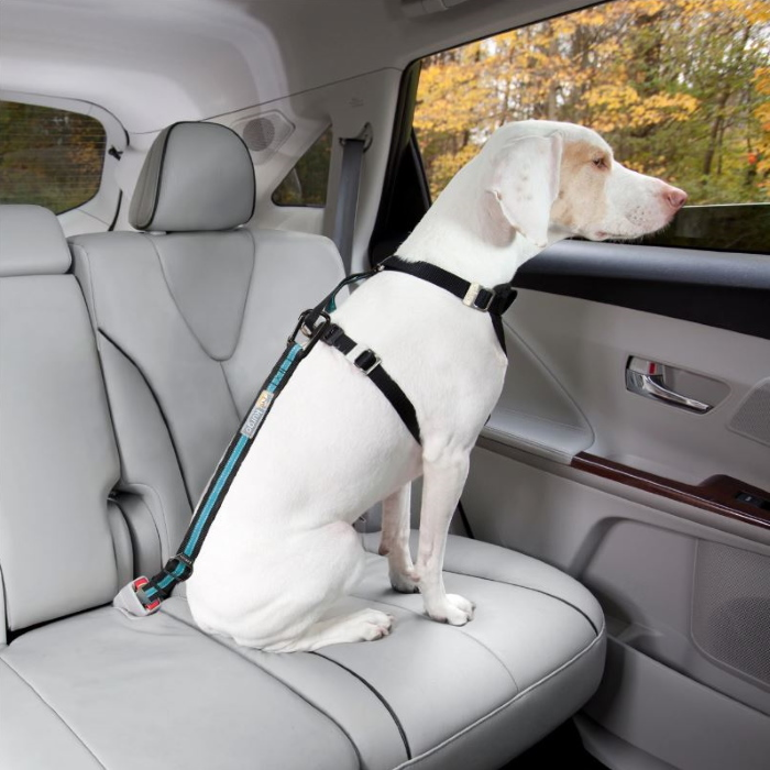 Kurgo Direct to Seat Belt Dog Tether_Blue