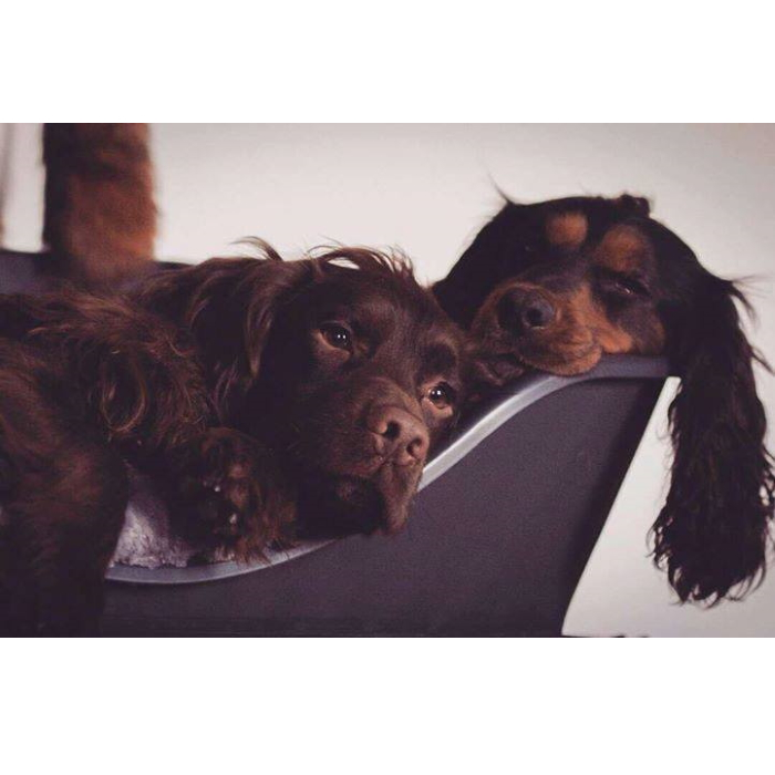 Wonderfold Collapsible Dog Bed Dark Grey Two Spaniels