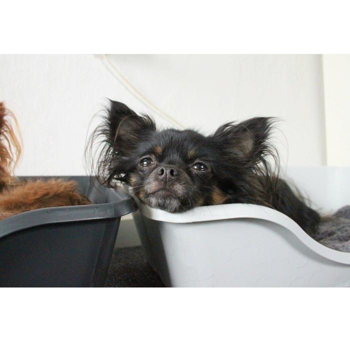 Wonderfold Collapsible Dog Bed Dark & Light Grey