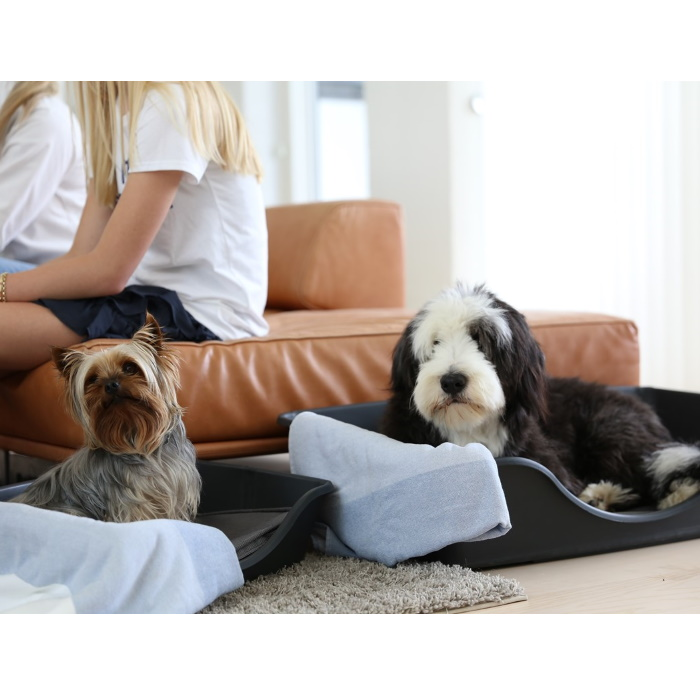 Wonderfold Collapsible Dog Bed Lifestyle 2