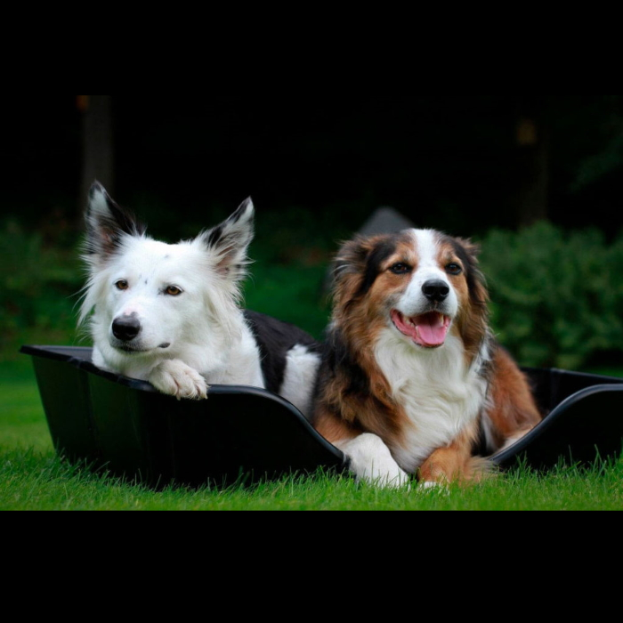 Wonderfold Collapsible Dog Bed Lifestyle 6