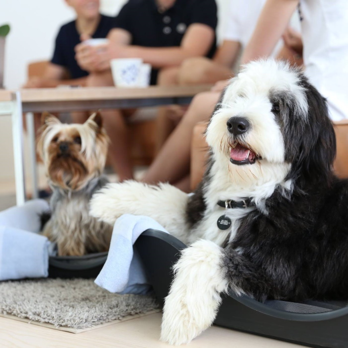 Wonderfold Collapsible Dog Bed Lifestyle