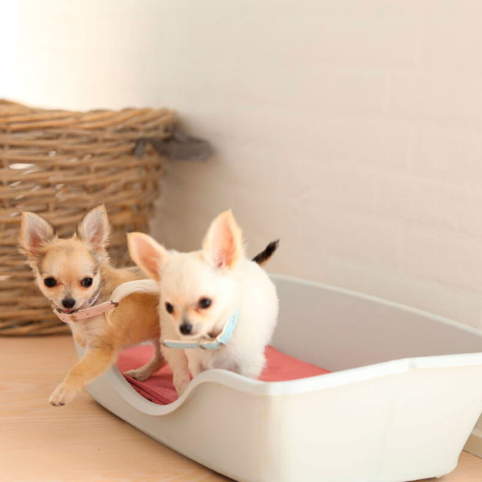 Wonderfold Collapsible Dog Bed Light Grey 2 Dogs