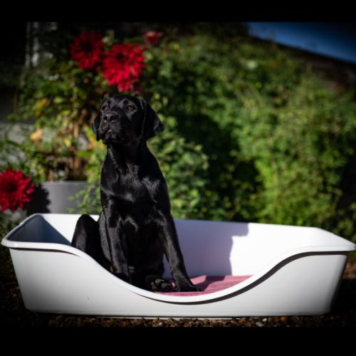 Wonderfold Collapsible Dog Bed Light Grey Black Dog