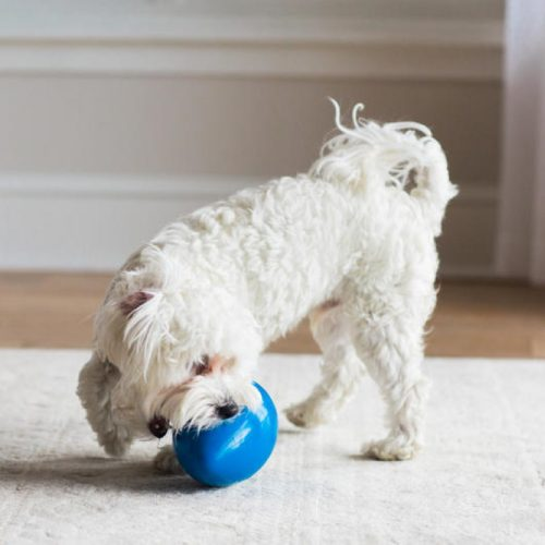 JW Mega Egg Dog Toy Interactive wobble toy