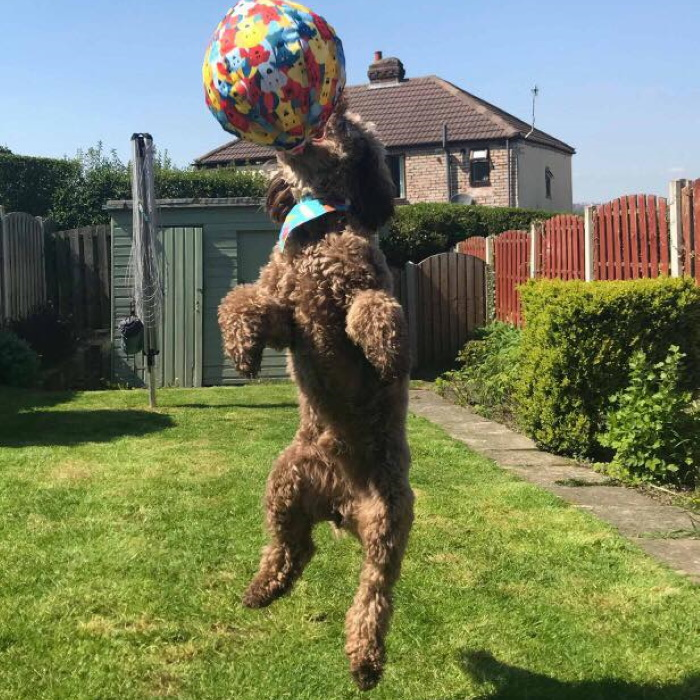 PetBloon Interactive Balloon Dog Toy 7