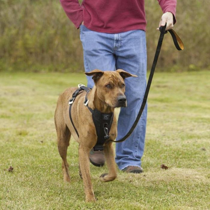 Kurgo Enhanced Strength Tru-Fit Dog Car Harness 5