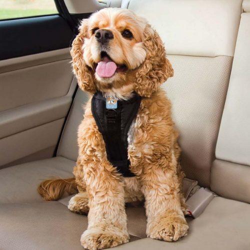 Kurgo Enhanced Strength Tru-Fit Dog Car Harness 7