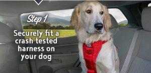 pet-travel-safety-banner-2