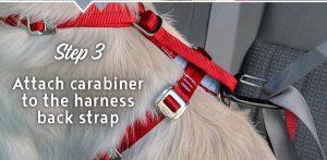 pet-travel-safety-banner-4