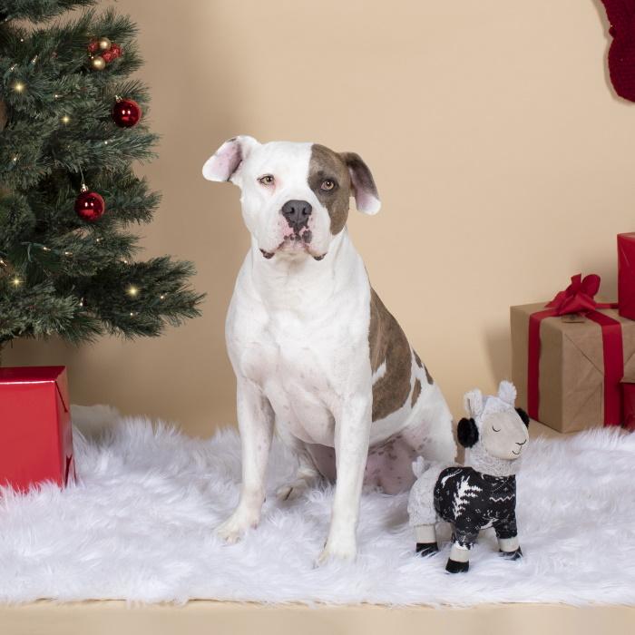 Fringe Studio Christmas Fa La La La Llama Dog Toy