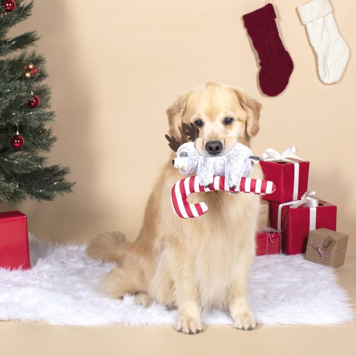 Fringe Studio Christmas Sloth on Candycane Squeaker Dog Toy