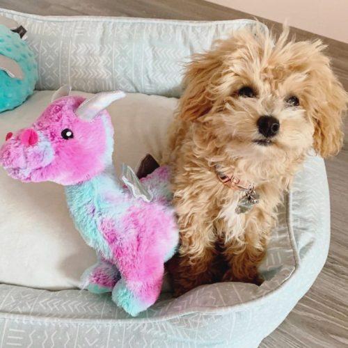 Fringe Studio Magenta Dragon Plush Squeaker Dog Toy LS