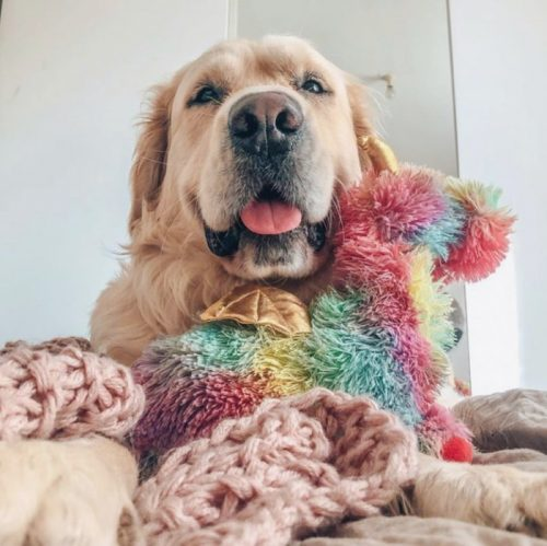 Fringe Studio Rainbow Dragon Plush Squeaker Dog Toy LS