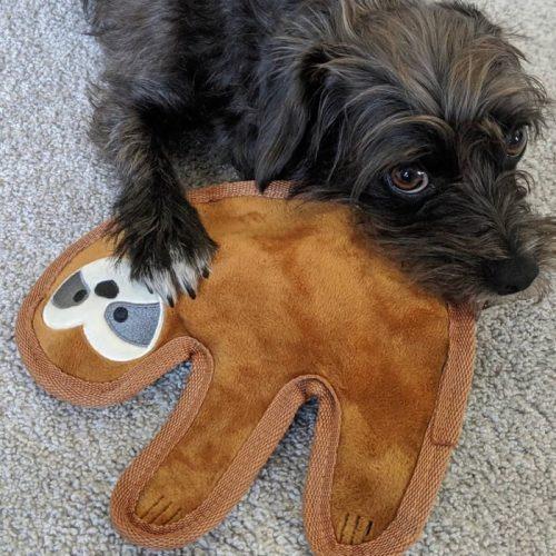 Fringe Studio Sloth Durable Plush Dog Toy LS
