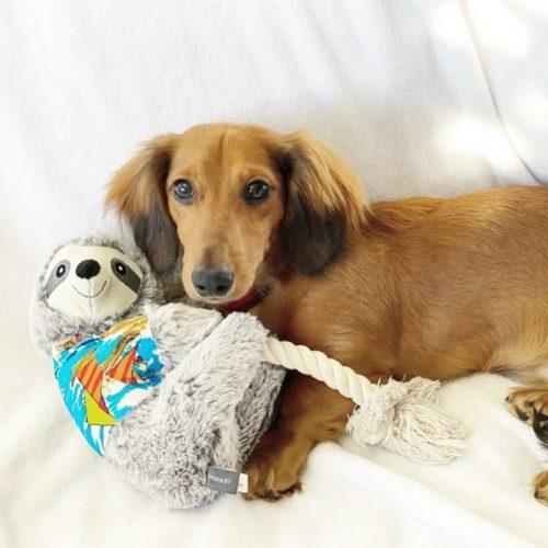 Fringe Studio Slown' Down For Summer Sloth Dog Toy LS1