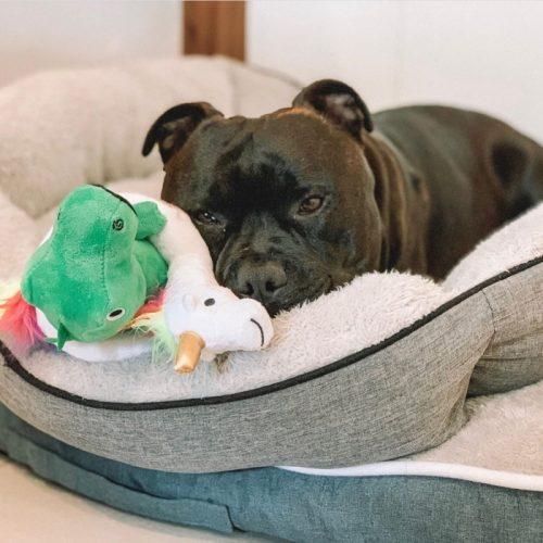 Fringe Studio Summa Time Rex Plush Dog Toy LS