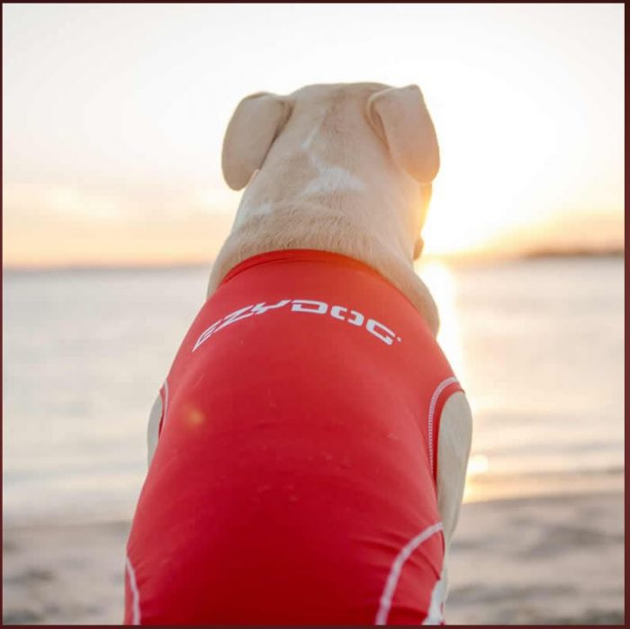 EzyDog Dog Rashie UV 50+ Sun Protection Beach