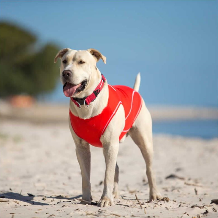 EzyDog Dog Rashie UV Sun Protection LS