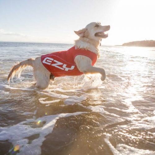 EzyDog Dog Rashie UV Sun Protection LS2