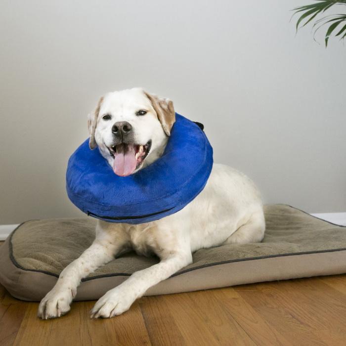 Kong Cloud Recovery Dog Collar