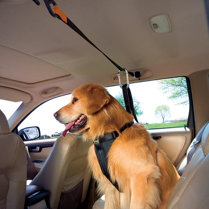 Kurgo Auto Zip Line Seat belt restraint for dogs