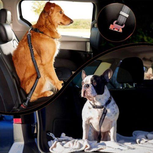 Bungee Dog Car Seat Belt Attachment