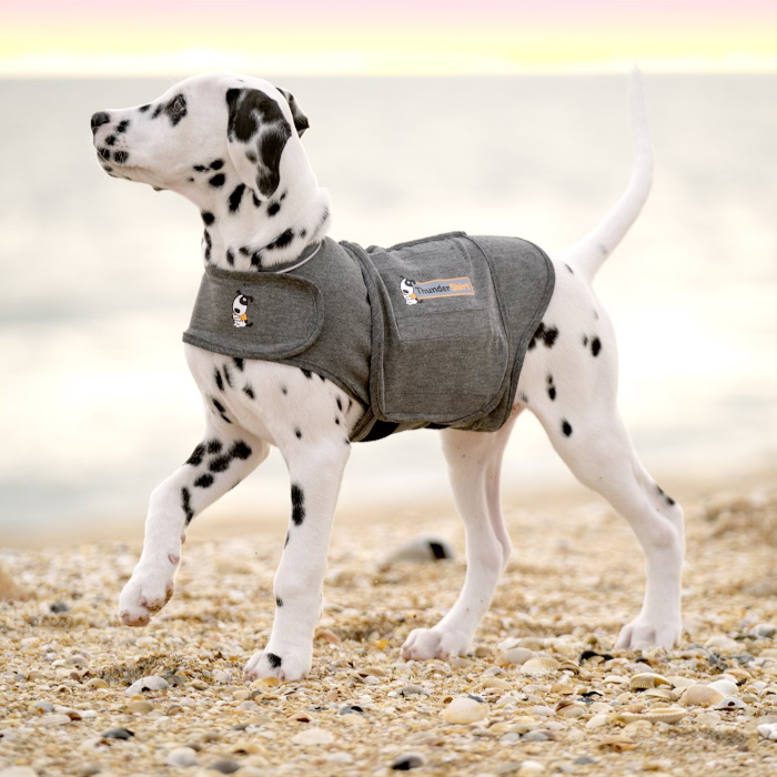 ThunderShirt_for_Dogs_Heather_Gray_Dalmation