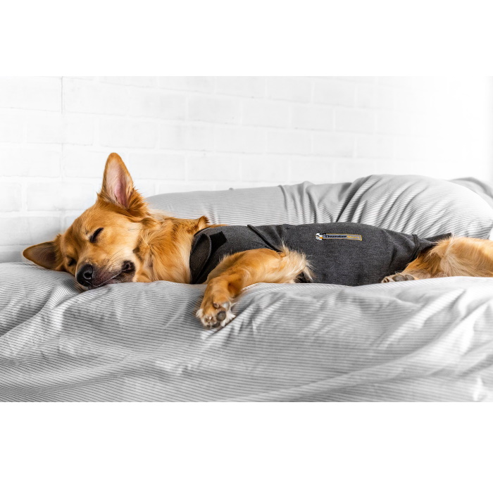 ThunderShirt_for_Dogs_Heather_Gray_Sleeping dog