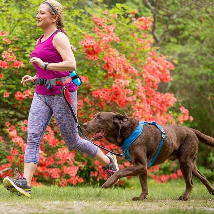 K9 Excursion Kurgo Running Belt_dog leash