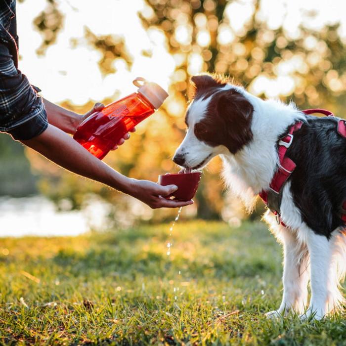 Kurgo Gourd Dog Travel Water Bottle and Bowl_LS2