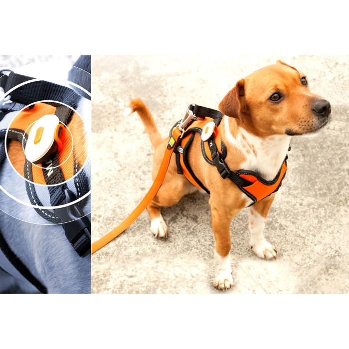 Max and Molly Safety LED Dog Harness Light_LS